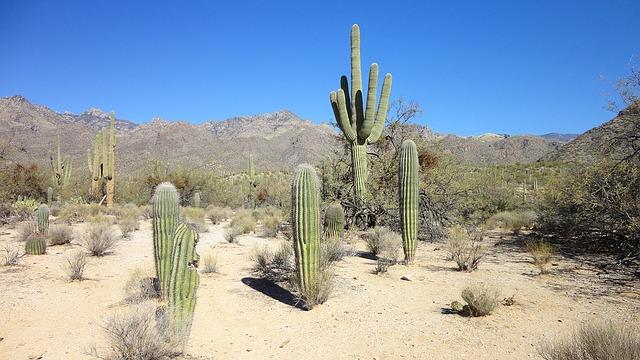 weather of Tucson
