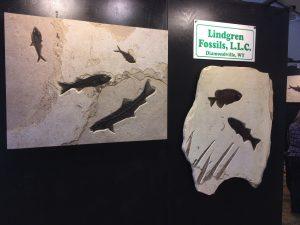 Arizona Mineral & Fossil Show
